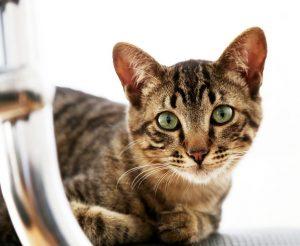 interpretar olores de los gatos