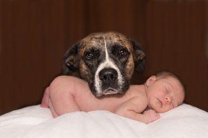 perro-bebe-presentaciones