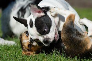 juego-perros-social